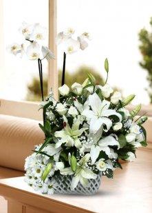 Premium Orkide Lilyumlar