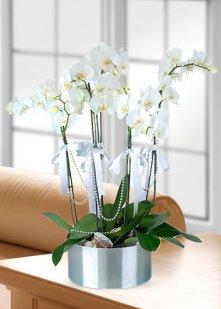 5 Dal Orkide